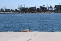 Water, Waterfront, Shorts, Port, Dock, Harbor, Pier, Pants, People, Building, Sea, Ocean, Vacation, Female, Footwear