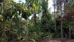 Plant, Vegetation, Tree, Land, Rainforest, Jungle, Garden, Arbour, Forest, Woodland, Grove, Conifer, Food, Yard, Fruit
