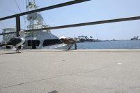 Bird, Ship, Military, Cruiser, Vehicle, Navy, Boat, Watercraft, Vessel, Yacht, Aircraft, Helicopter, Airplane, Water, Battleship