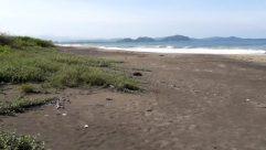 Ground, Water, Sea, Ocean, Shoreline, Coast, Beach, Bird, Wood, Sand, Landscape, Bay, Soil, Road, Sea Waves