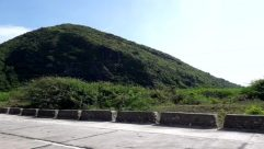 Plant, Bush, Vegetation, Slope, Wilderness, Land, Tree, Woodland, Forest, Rainforest, Mountain, Countryside, Hill, Road, Rock