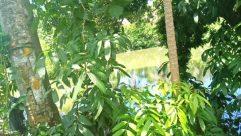 Vegetation, Plant, Tree, Land, Rainforest, Jungle, Forest, Woodland, Leaf, Water, Grove, Food, River, Bush, Vegetable
