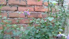 Brick, Plant, Leaf, Wall, Vegetation, Vine, Blossom, Flower, Produce, Food, Wildlife, Vase, Jar, Pottery, Potted Plant