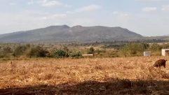Ground, Cow, Cattle, Countryside, Vegetation, Plant, Bush, Wilderness, Soil, Field, Land, Grassland, Landscape, Rural, Hill