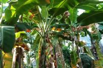Plant, Vegetation, Land, Rainforest, Tree, Jungle, Food, Vegetable, Leaf, Fruit, Field, Produce, Countryside, Green, Blossom