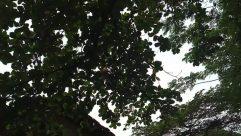 Plant, Tree, Leaf, Vegetation, Vine, Tree Trunk, Garden, Arbour, Countryside, Sunlight, Building, Rural, Housing, Shelter, Oak