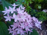 Plant, Purple, Blossom, Flower, Petal, Vegetation, Leaf, Lilac, Bush, Iris, Asteraceae, Jar, Potted Plant, Pottery, Vase