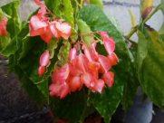 Plant, Blossom, Flower, Anthurium, Petal, Pottery, Potted Plant, Vase, Jar, Leaf, Geranium, Planter, Flower Arrangement, Araceae, Bird