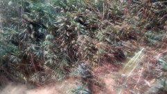 Vegetation, Plant, Soil, Land, Tree, Rainforest, Jungle, Grass, Bush, Woodland, Forest, Grove, Path, Military, Military Uniform