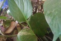 Leaf, Plant, Blossom, Flower, Araceae, Food, Vegetable, Tree, Vegetation, Invertebrate, Anthurium, Insect, Spinach, Bird, Wildlife