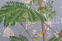 Plant, Astragalus, Flower, Blossom, Vegetation, Leaf, Fern, Tree, Ice, Land, Flare, Light, Rainforest, Water, Rug