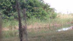 Land, Plant, Water, Vegetation, Tree, Field, Bush, Grassland, Grass, Yard, Countryside, Forest, Woodland, Swamp, Marsh