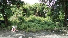 Water, Vegetation, Plant, Bird, Yard, Land, Tree, Stream, Woodland, Forest, Chair, Furniture, Vehicle, Rainforest, Path