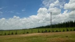 Vegetation, Plant, Tree, Weather, Cloud, Sky, Cumulus, Grass, Woodland, Forest, Land, Car, Automobile, Vehicle, Abies