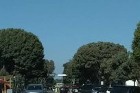 Road, Town, Street, City, Building, Plant, Automobile, Vehicle, Car, Tree, Vegetation, Sedan, Parking, Parking Lot, Housing