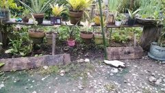 Plant, Yard, Potted Plant, Jar, Vase, Pottery, Bird, Garden, Aloe, Planter, Backyard, Soil, Vegetation, Furniture, Tabletop