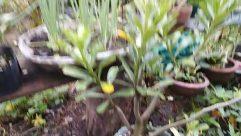 Plant, Jar, Potted Plant, Pottery, Vase, Planter, Soil, Blossom, Flower, Food, Garden, Herbs, Produce, Yard, Vegetable