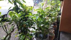 Plant, Garden, Arbour, Leaf, Bird, Flower, Blossom, Vegetation, Tree, Jar, Potted Plant, Pottery, Vase, Vehicle, Land