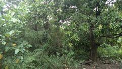 Vegetation, Plant, Land, Jungle, Tree, Rainforest, Forest, Woodland, Grove, Bush, Yard, Garden, Arbour, Tree Trunk