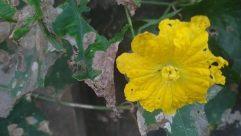 Plant, Blossom, Flower, Geranium, Leaf, Pollen, Landslide, Ivy, Veins, Landscape, Tree, Hail, Petal, Snow, Food