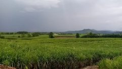 Field, Grassland, Countryside, Farm, Rural, Meadow, Land, Paddy Field, Grass, Plant, Pasture, Ranch, Grazing, Vegetation
