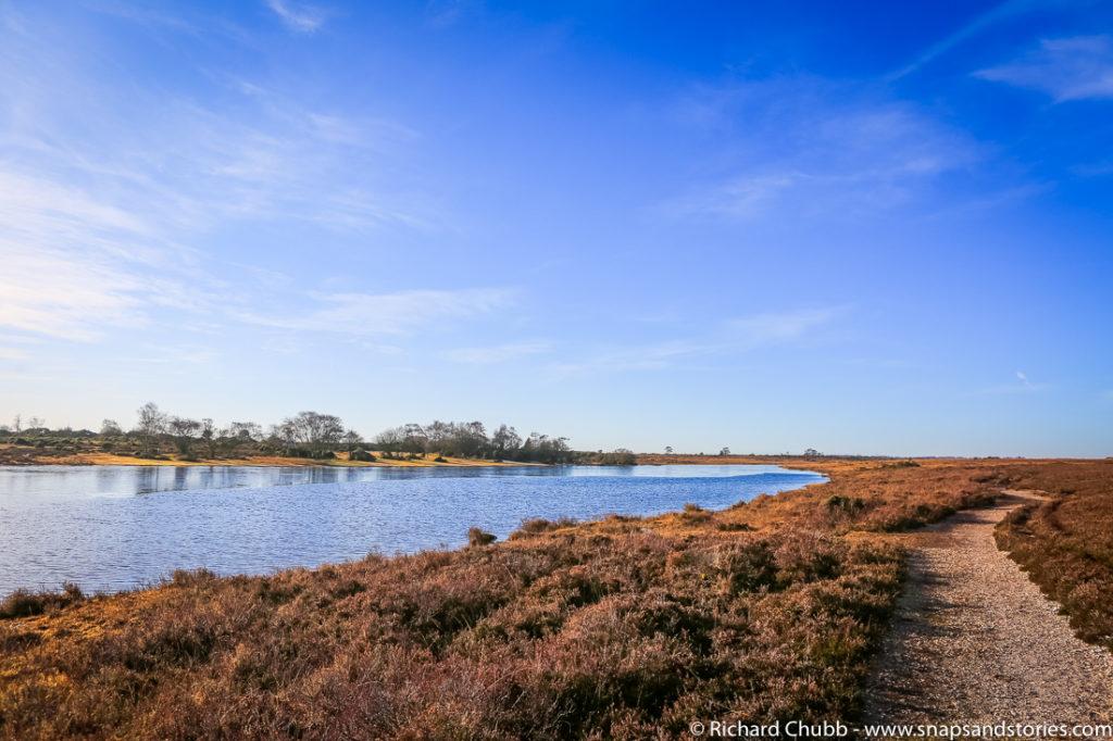 hatchet-pond-new-forest-walk-1008
