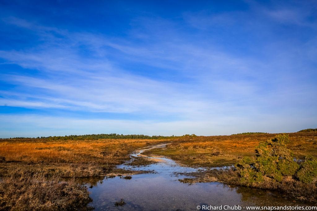hatchet-pond-new-forest-walk-1011
