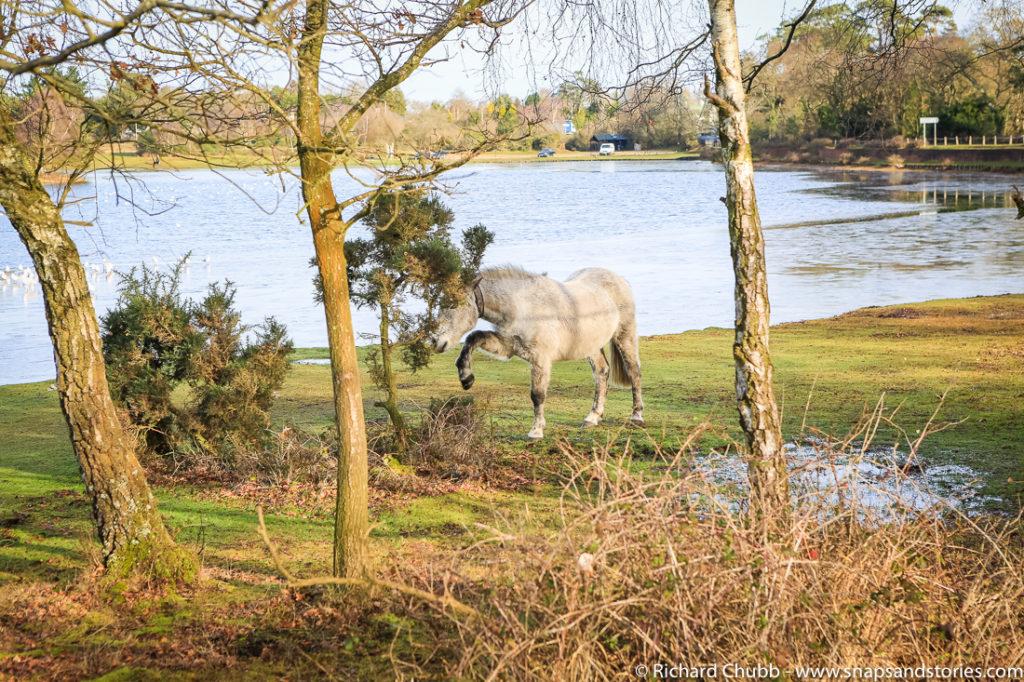 hatchet-pond-new-forest-walk-1016