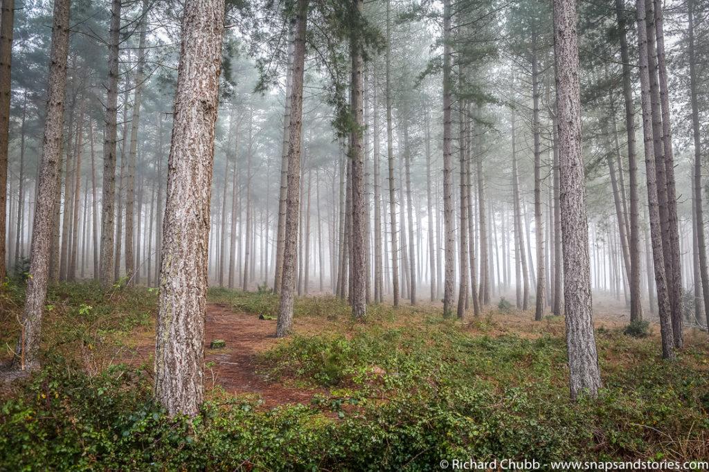 marchwood-walk-30-dec-1000