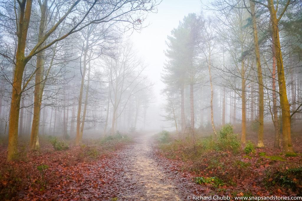 Matchwood New Forest Walk