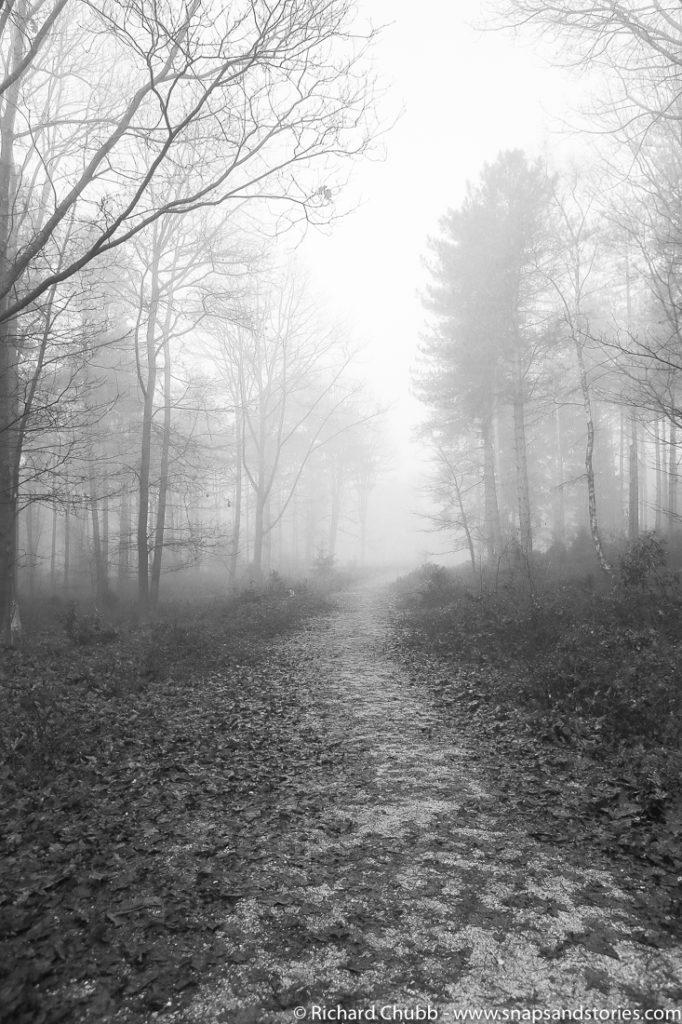 marchwood-walk-30-dec-1016
