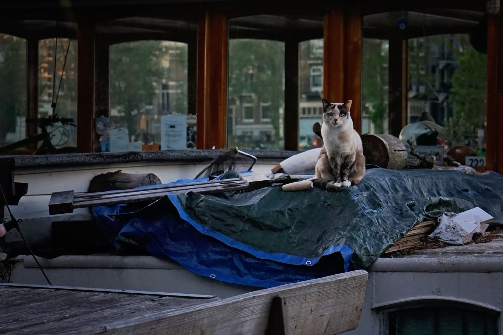 Amsterdam house boat cat