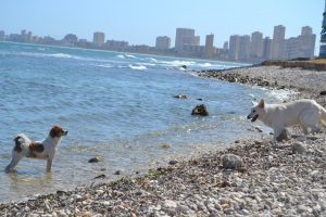 playas dogfriendly