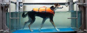 piscinas para perros en barcelona hidroterapia