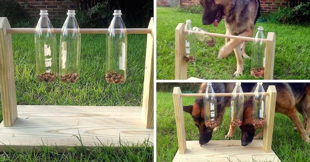 Juegos Interactivos Para Perros Blog Snau