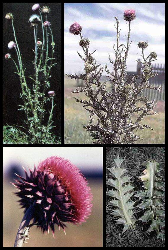 Plants Sale Canada