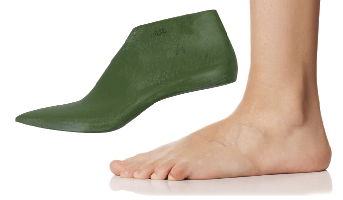 How is the last different from the human foot?
