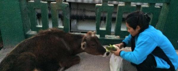 Devastating Earthquake and Stray Animals
