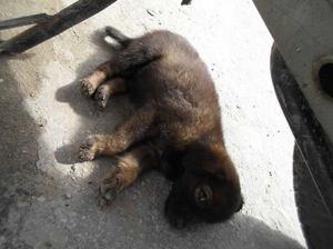 adopt straydogs