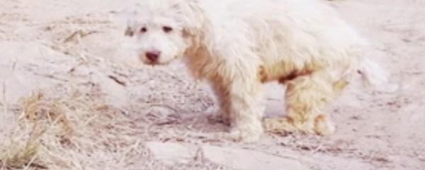 Dog Song ( Sano Chada ) – When you Abandoned Me !!!!