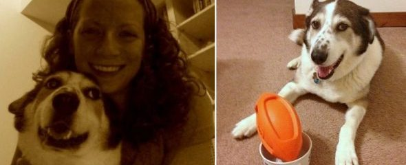 """Woman Creates """"Dating Profile"""" for Dog Battling Cancer So People Will Fall in Love With Him"""
