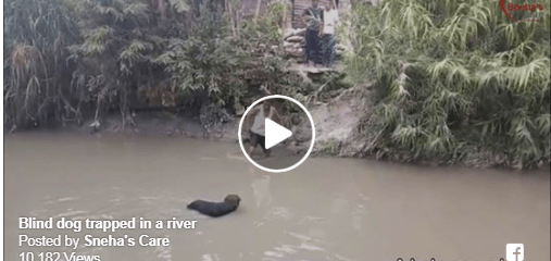 Blind Dog Rescued From River