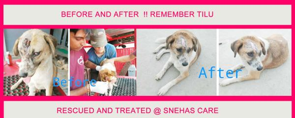 Tilu, Before and After, Rescued by Snehas Care