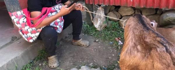 Pregnant Goat Rescued