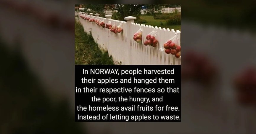 are surplus apples hung