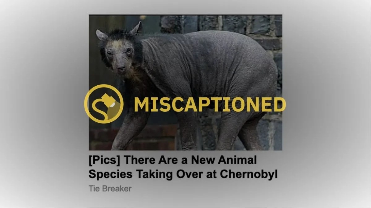 26 interview with cbs news, erdogan said he would consider buying a second russian missile system in defiance of strong objections by. Is This a 'New Animal Species Taking Over Chernobyl