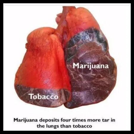 does marijuana contain more