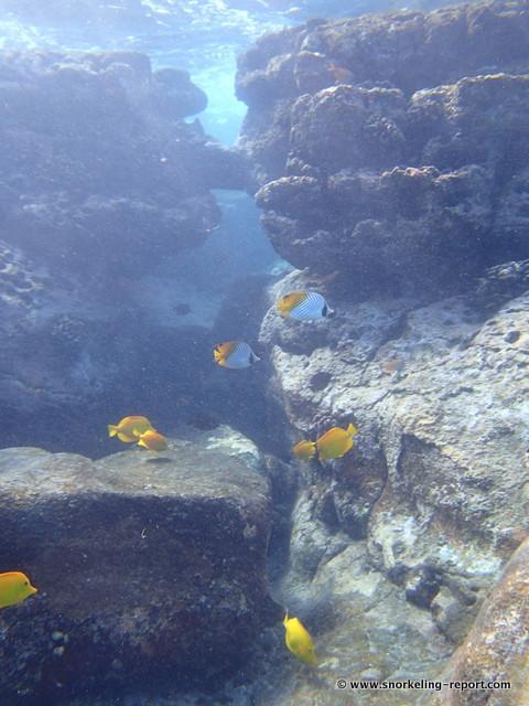 Snorkeling Spot In Two Step Big Island