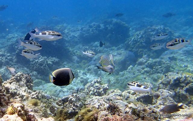 Snorkeling At Gun Beach Guam