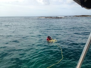 Snorkelling on Arnos Vale Reef